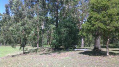 Surrounding Treeline